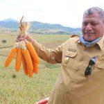 Bupati Dompu, Drs H. Bambang M. Yasin dengan latar belakang hamparan jagung. (Suara NTB/ula)